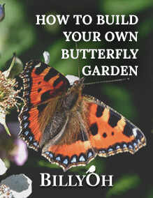 How to Build your own Butterfly Garden