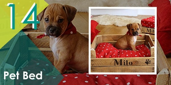 Give your pet a small present, something like a pallet bed.