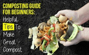 Composting Guide for Beginners