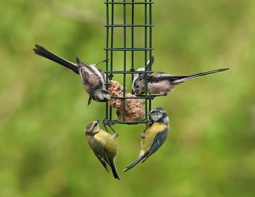 bird-feeder-garden-wildlife