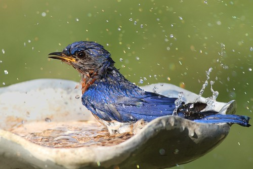 bird-bath-garden-wildlife