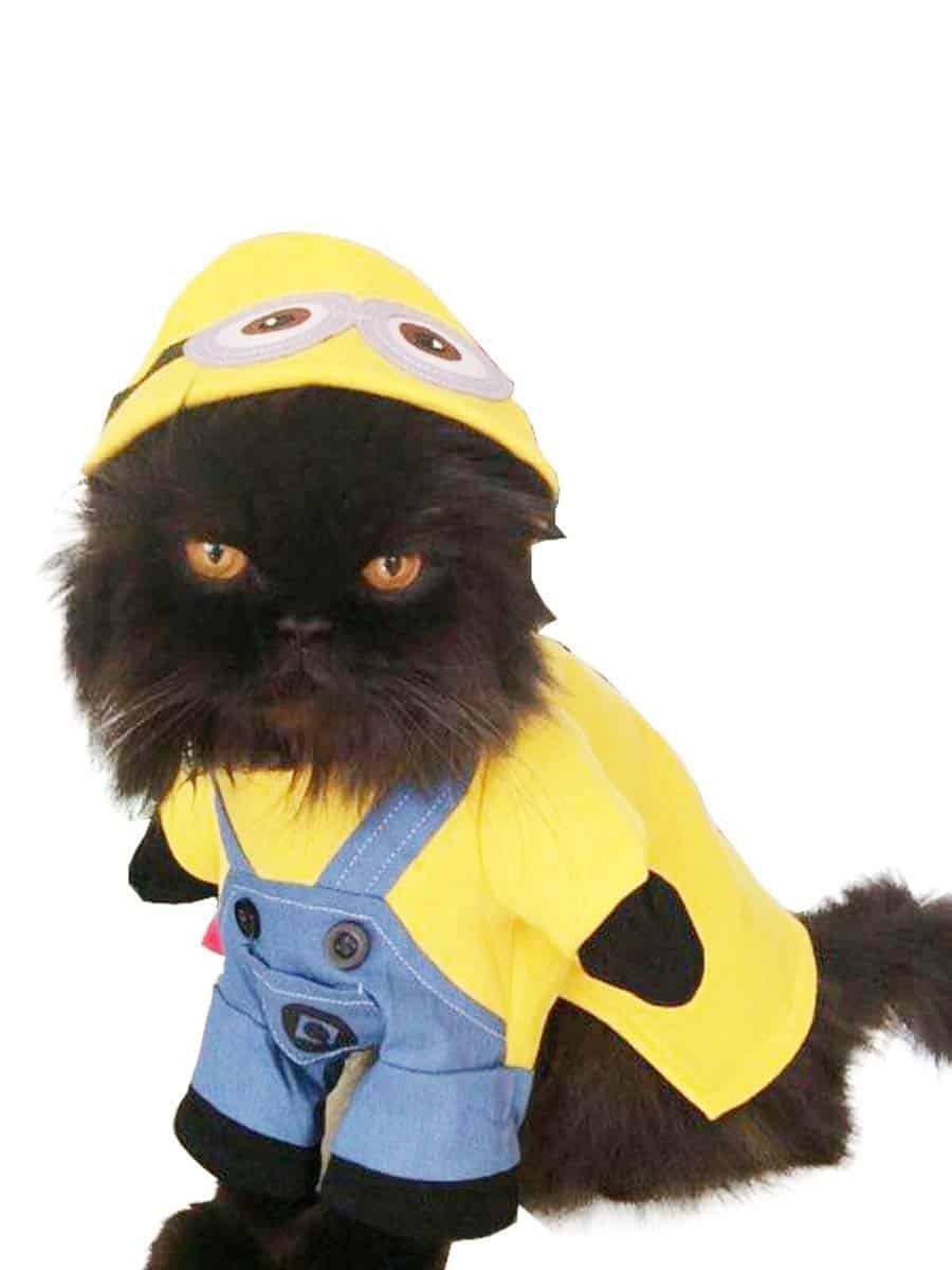Hilarious cat halloween costume