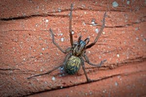 Seven Creatures That Might Invade Your Shed This Winter