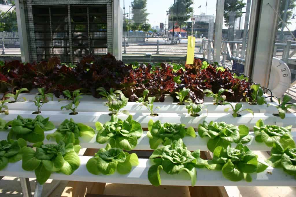 What is Hydroponics and Why is it Beneficial