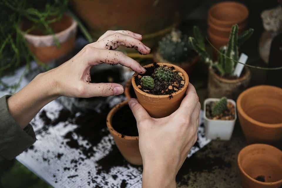 6 Top Calorie Burning Gardening Activities to Grow Your Garden