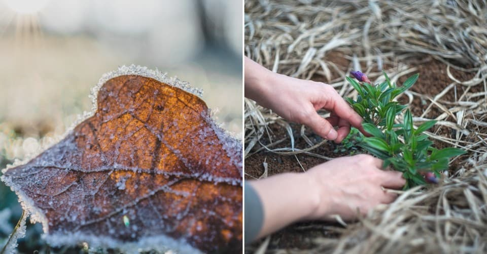 Eight Steps to Spring Clean Your Garden