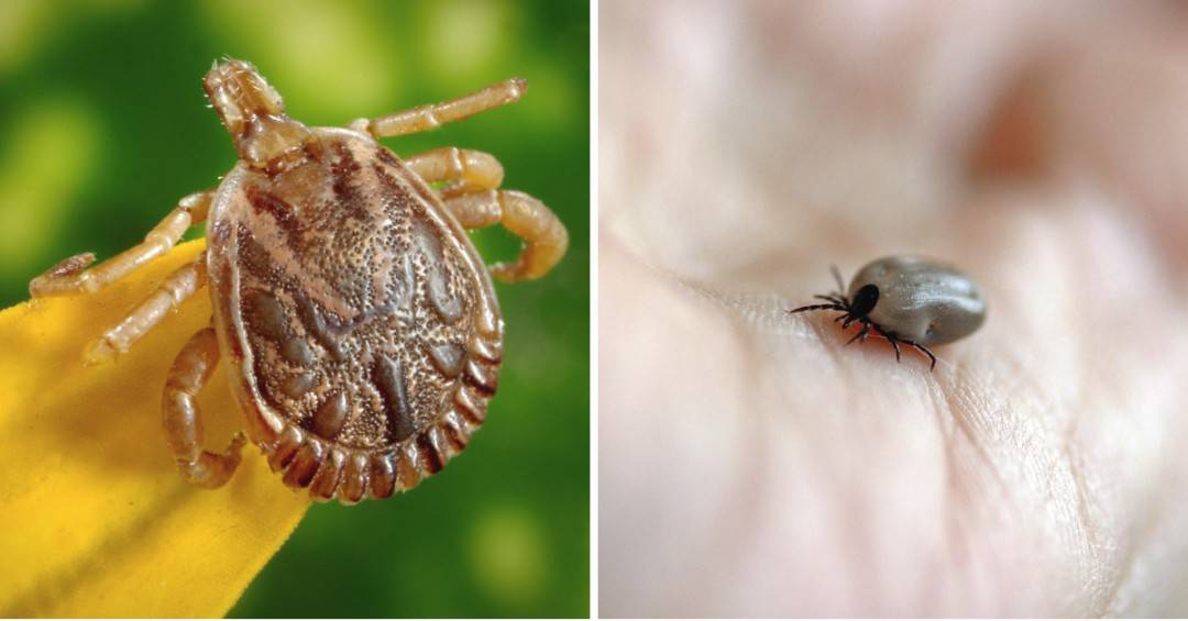 Here Are the Five Tick Season Warnings to Keep You Safe During Spring and Summer