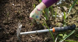 spring-clean-your-garden-2-get-rid-and-refresh