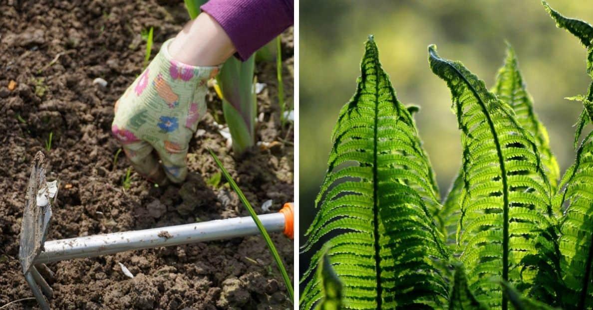 spring-clean-your-garden