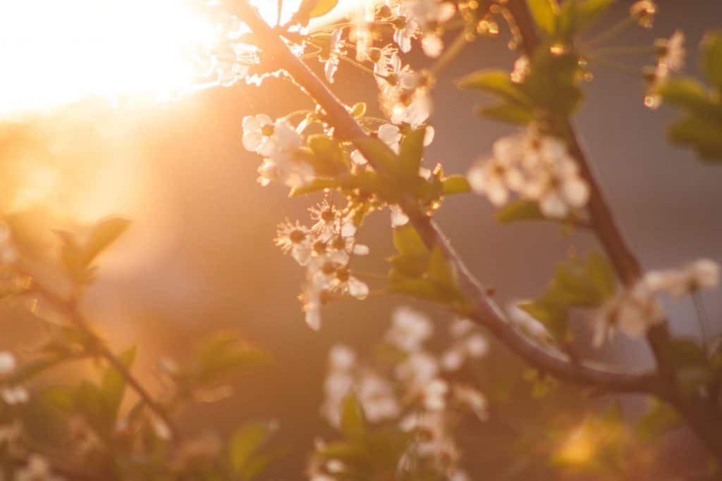 When Does Spring 2019 Start and Why Does It Date Vary from Year to Year?