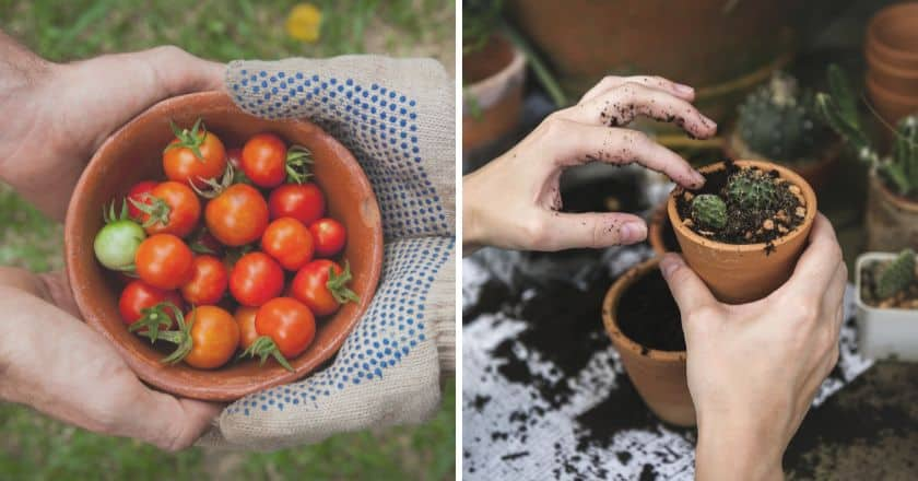 The Ultimate Plan to a Successful National Gardening Week
