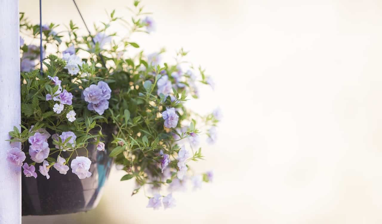 make-the-most-of-a-small-garden-4-hanging-baskets