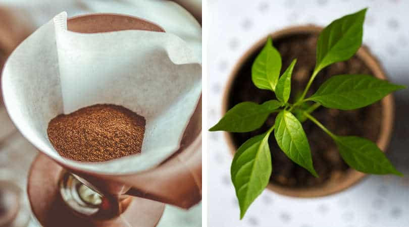 12-genius-gardening-hacks-04-coffee-filter