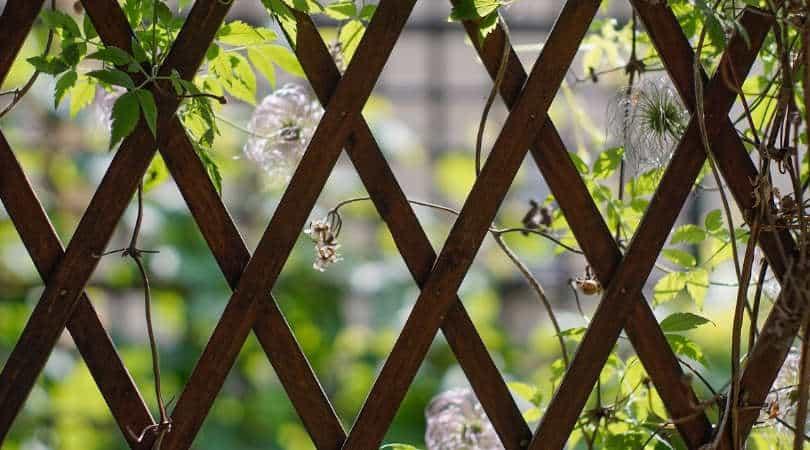12-genius-gardening-hacks-10-climbing-plants