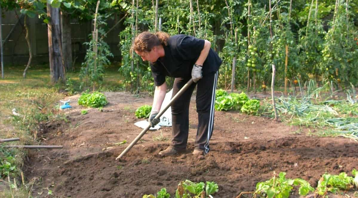 gardening-significant-health-benefits-1-gardening-keeps-you-healthy-and-fit