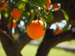 gardening-significant-health-benefits-fruits