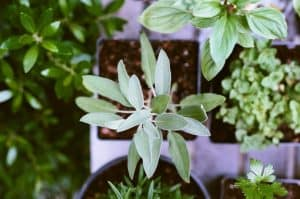 gardening-significant-health-benefits-herbs