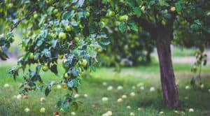 gardening-significant-health-benefits-plants-and-trees