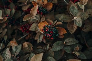 gardening-significant-health-benefits-seeds-and-berries