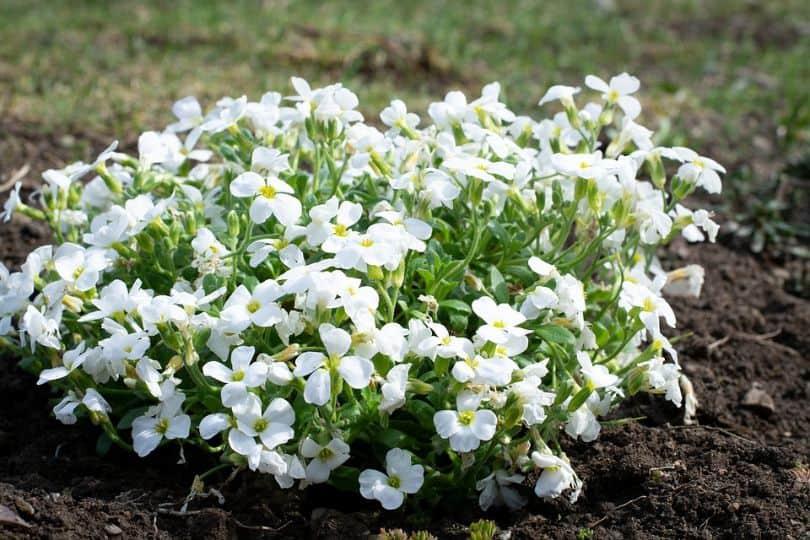 low-budget-garden-ideas-3-gradual-gardening