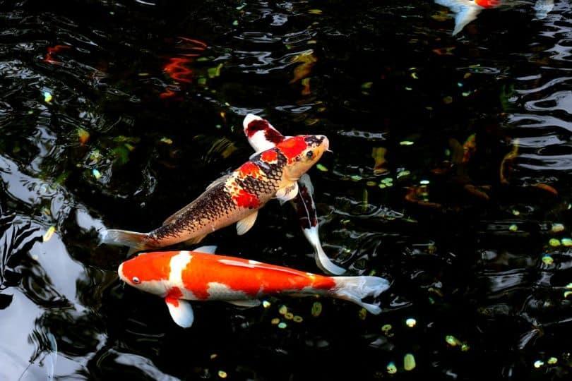 water-features-garden-1-natural-habitat-for-fish
