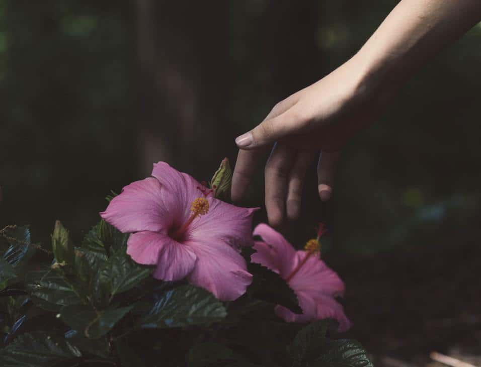 A hand picking flowers