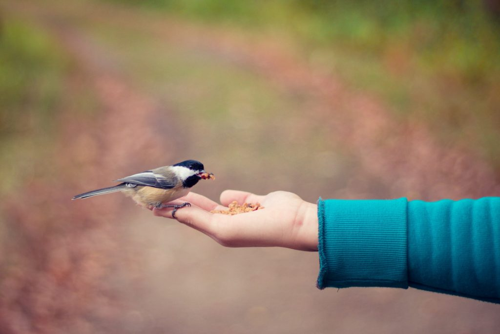 A bird eating seed out of a child's hand