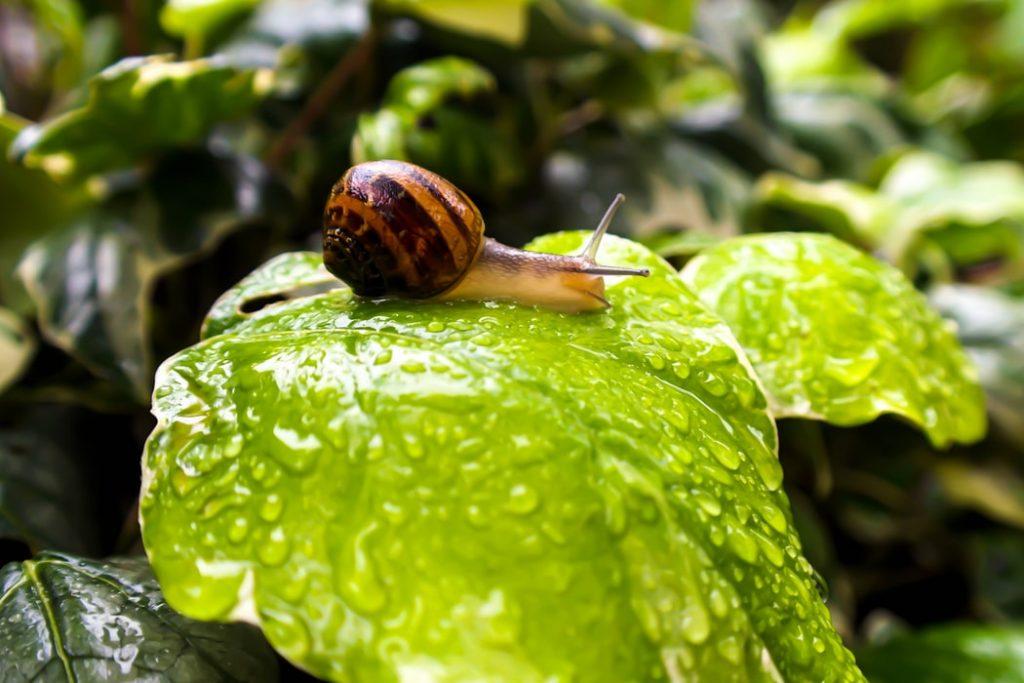 A snail on a leaf