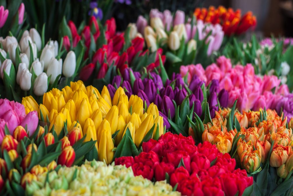 Flowers in various colours
