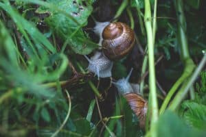 best-garden-activities-for-kids-8-collecting-snails