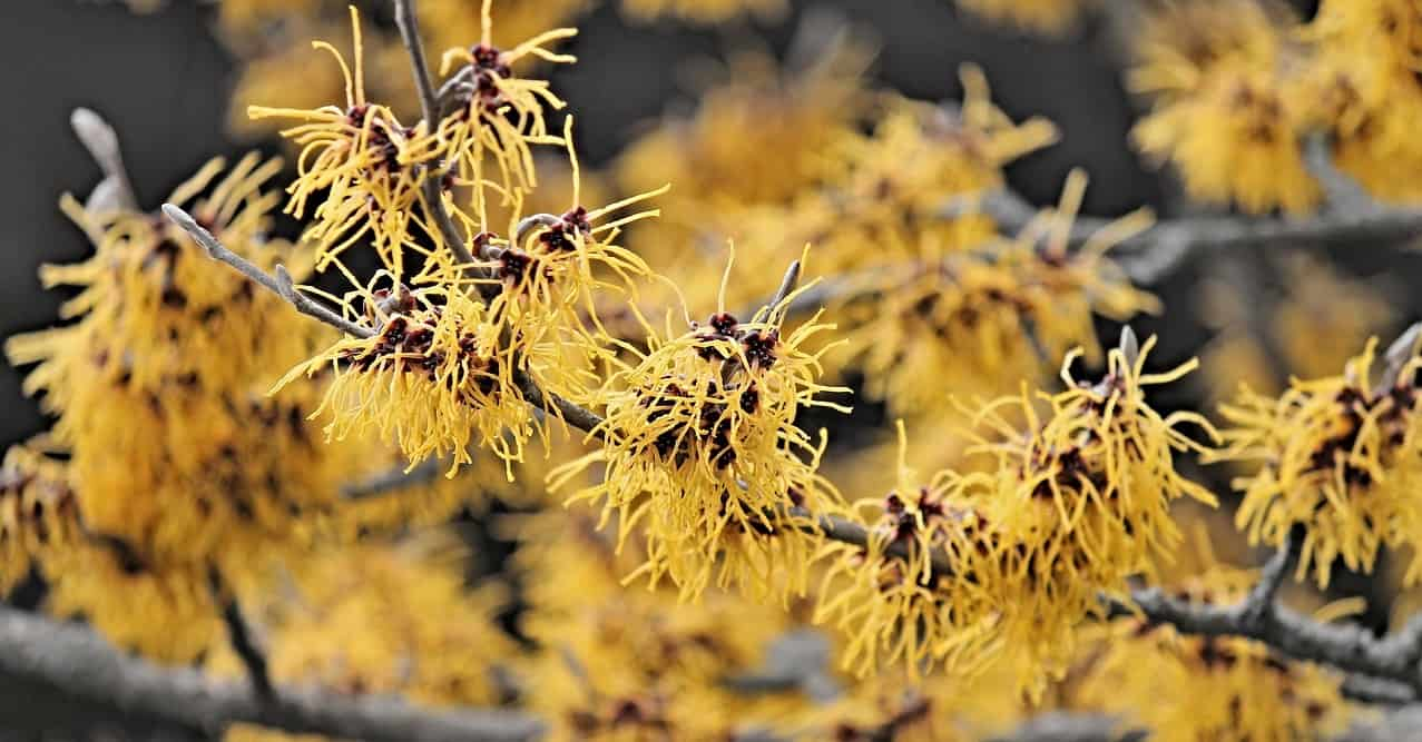 bite-and-sting-relief-4-witch-hazel