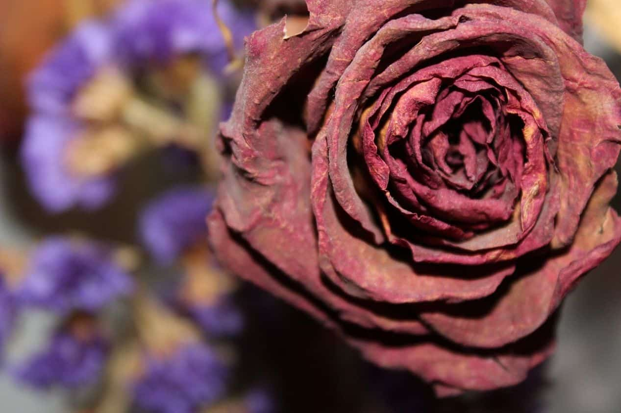 gardening-terms-explained-10-dead-heading