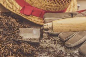 gardening-terms-explained-2-mulching
