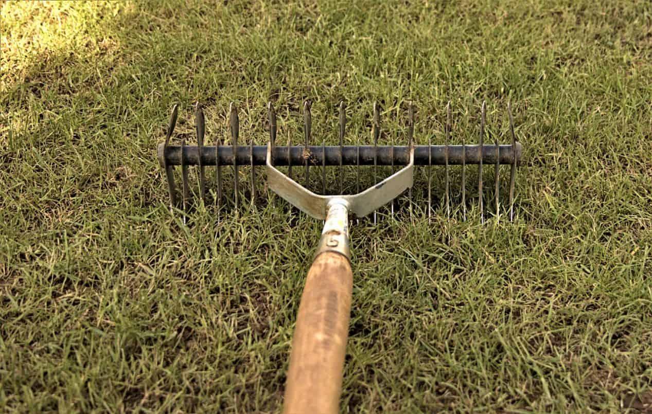 gardening-terms-explained-4-scarifying