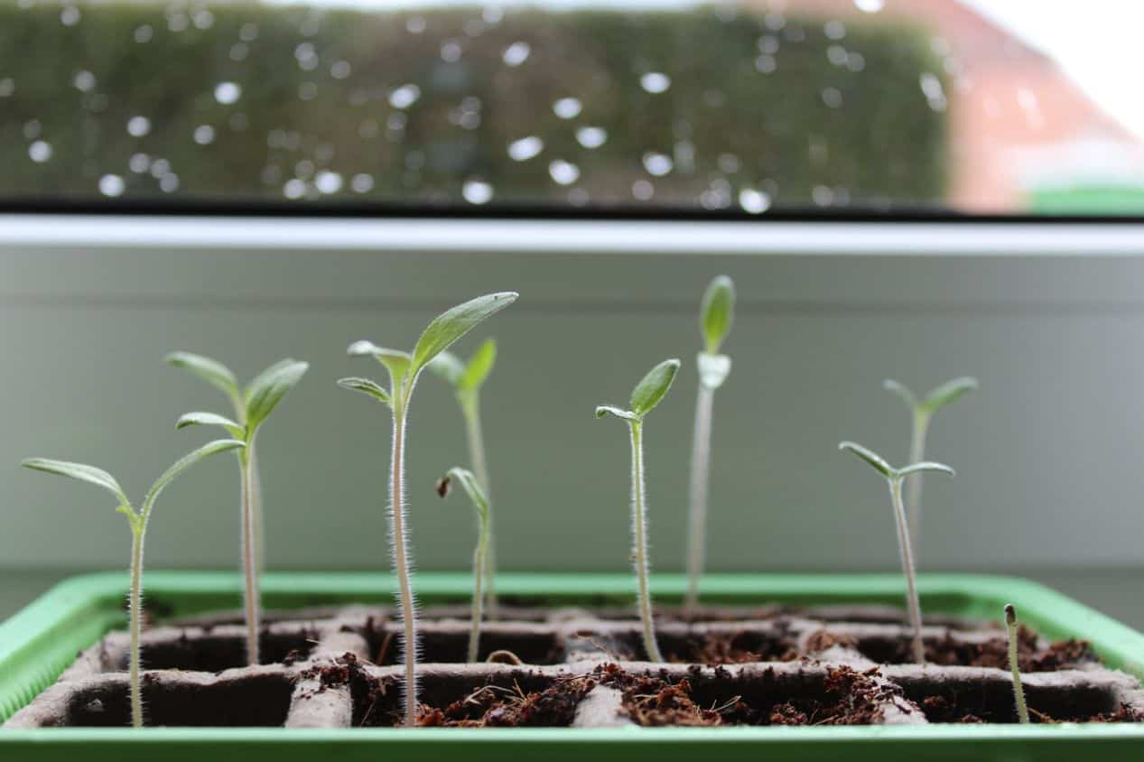 gardening-terms-explained-5-germinate