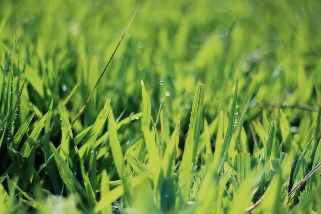 Grass and water droplets
