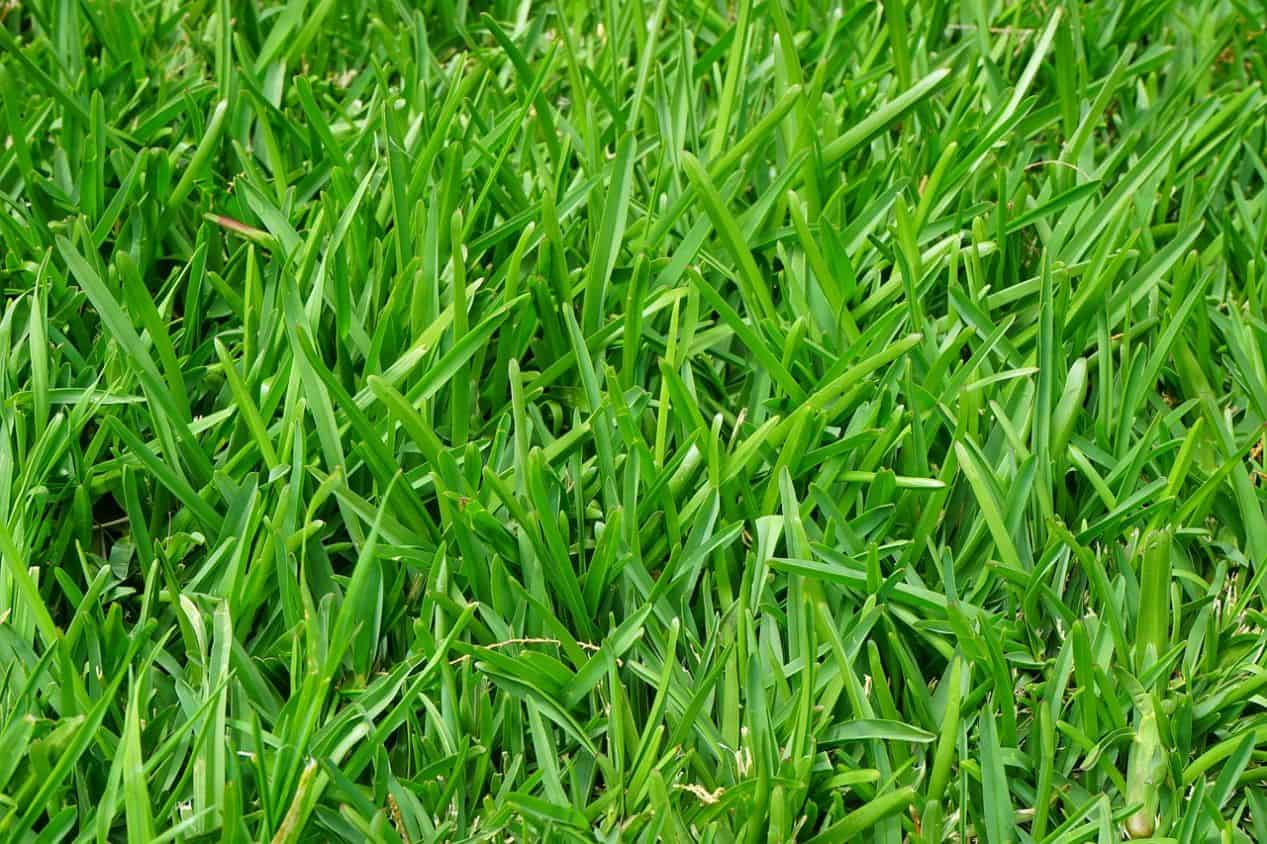 how-to-revive-a-lawn-autumn-1-aeration