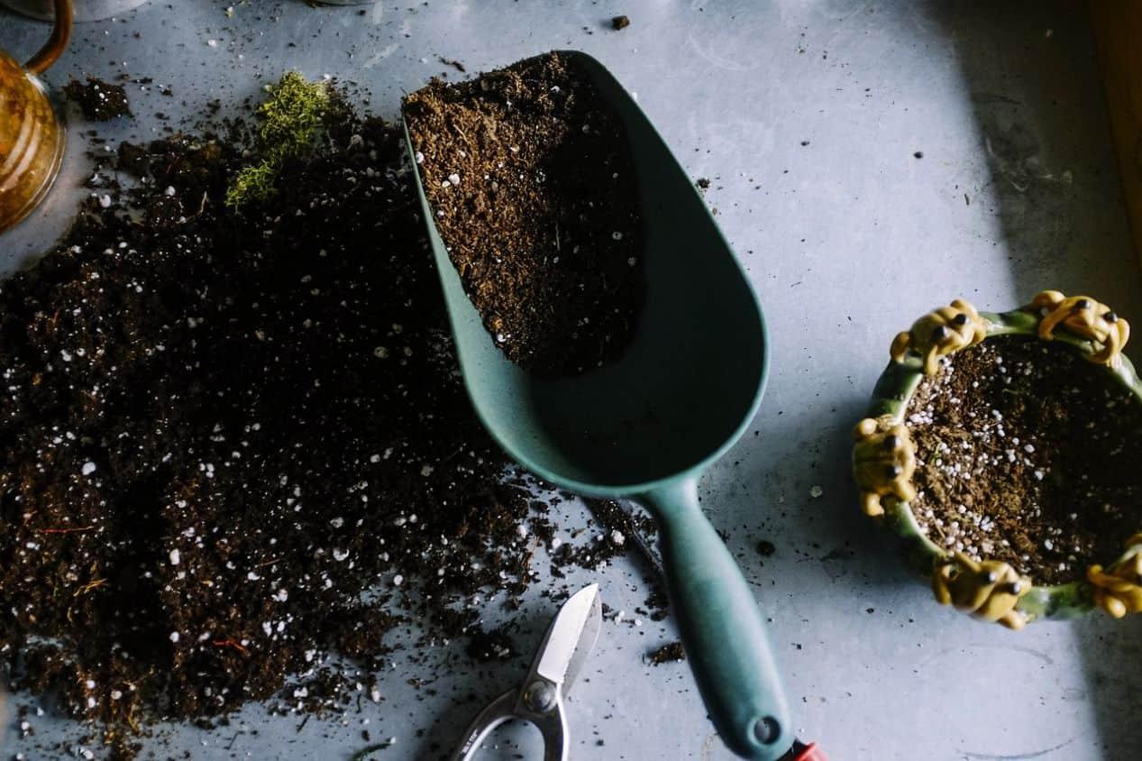 how-to-revive-a-lawn-autumn-2-fertilise