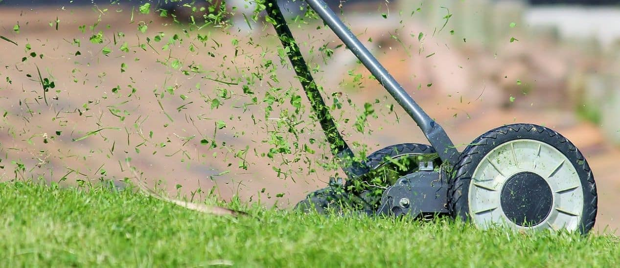 how-to-revive-a-lawn-autumn-5-recycle-grass