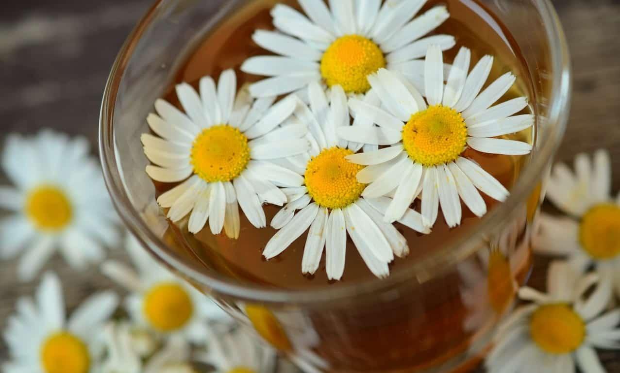 seven-stress-relief-plants-2-chamomile