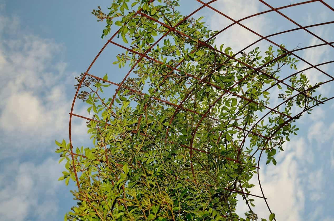 consider-choosing-garden-climbers-2-support