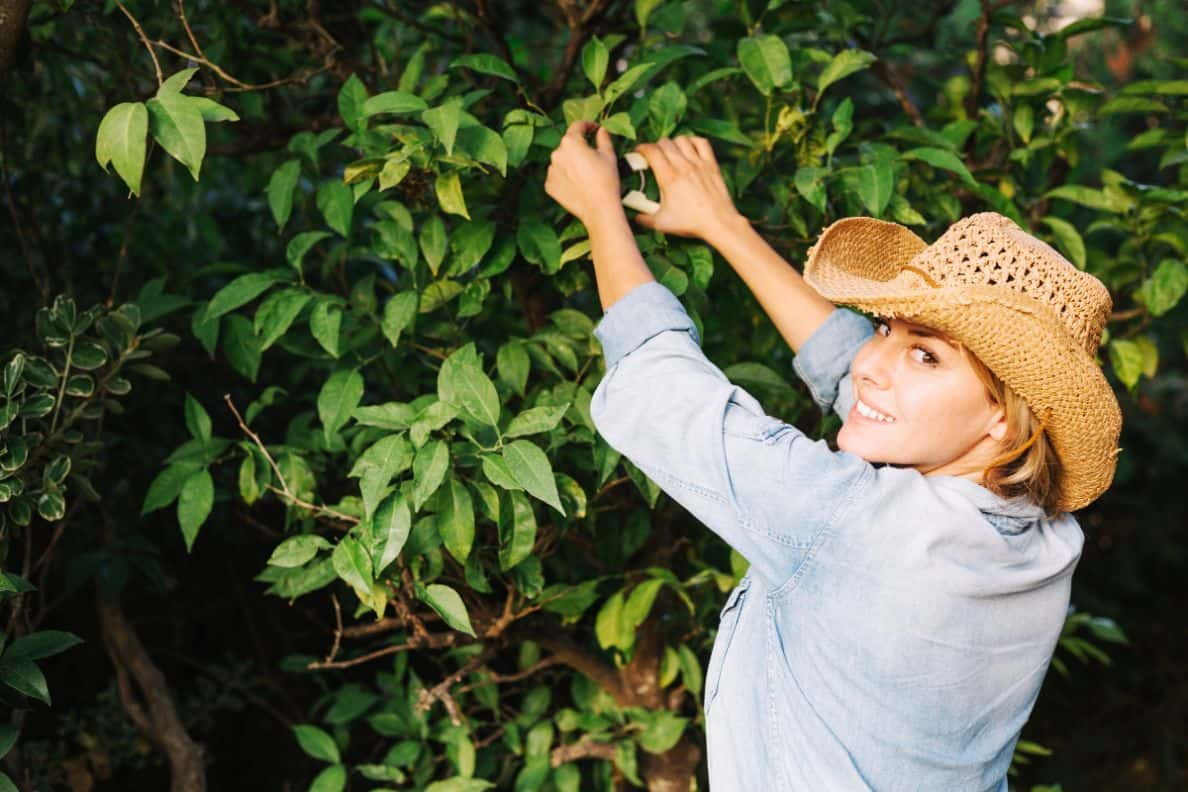 consider-choosing-garden-climbers-3-pruning