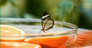how-to-attract-butterflies-to-your-garden-