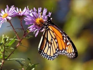 how-to-attract-butterflies-to-your-garden-2-sun-friendly