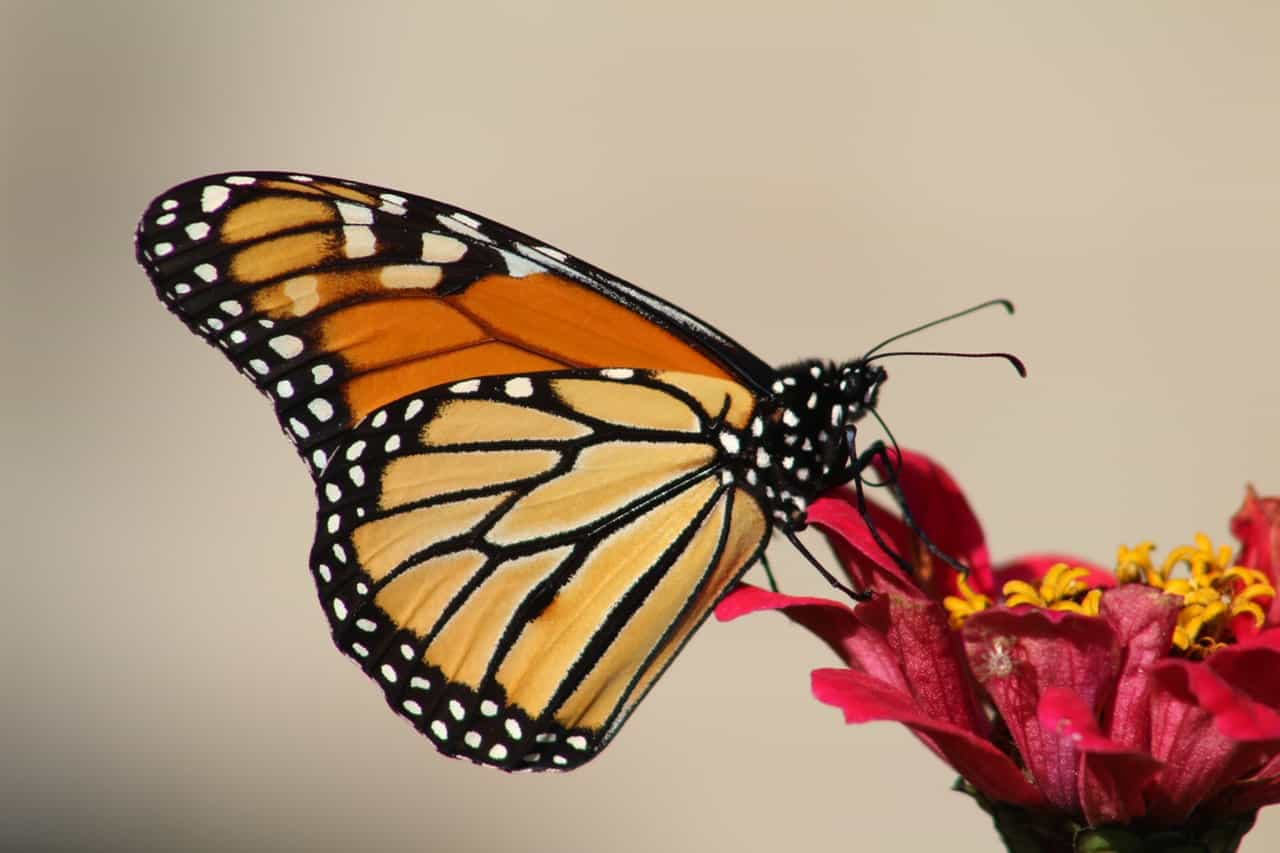how-to-attract-butterflies-to-your-garden-4-picking-plants