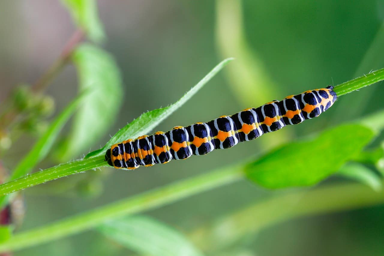 how-to-attract-butterflies-to-your-garden-5-cut-weeding