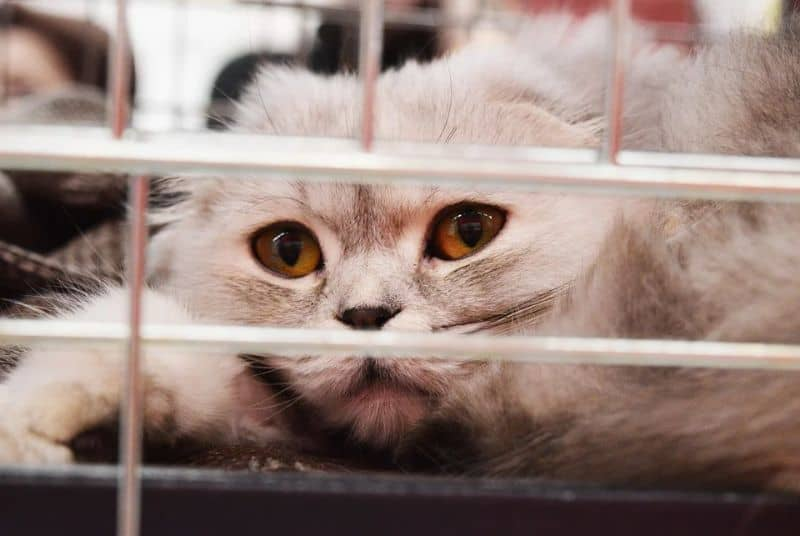 close up of cat lying down in a cage