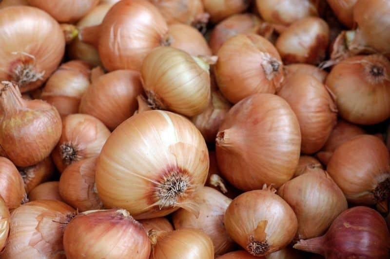 pile of white onions