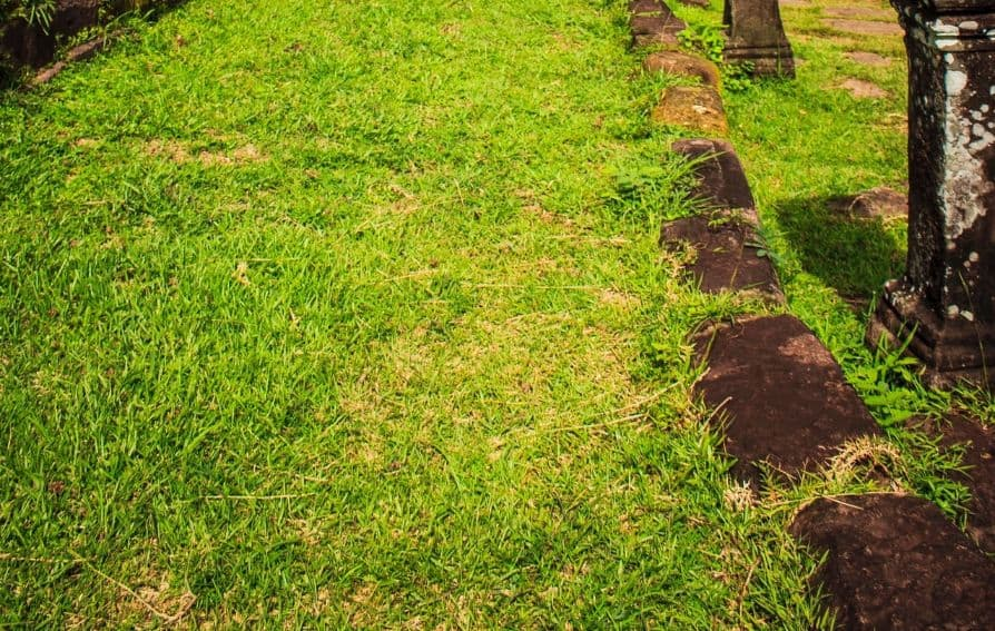 prevent-common-garden-problems-2-patchy-grass