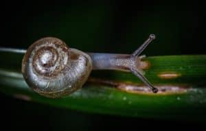 prevent-common-garden-problems-6-slugs-and-snails